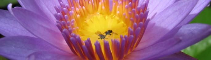 cropped-lotus.jpg